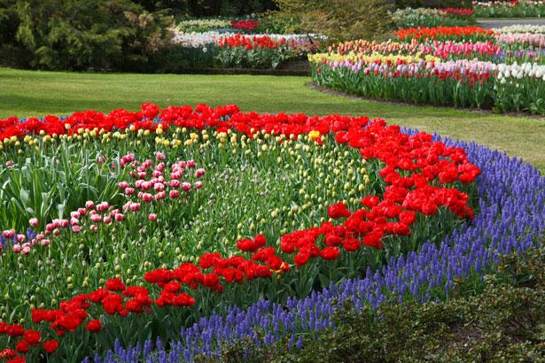 Garden Design: Garden Design With Flower Master Garden Planning