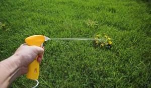 Landscapers preventing weeds
