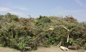 Removal of Yard Waste